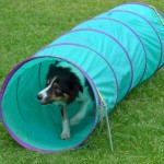 Puppy Dog Training Classes Bearsden-02