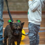 Puppy Dog Training Classes Bearsden-05