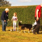 Puppy Dog Training Classes Glasgow-06