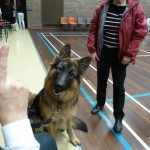 Puppy Dog Training Classes Glasgow-07