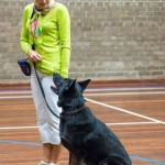 Puppy Dog Training Classes Glasgow-11