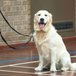 Puppy Dog Training Classes Glasgow-14