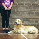 Puppy Dog Training Classes Glasgow-16