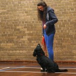 Puppy Dog Training Classes Milngavie-02