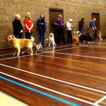 Puppy Dog Training Classes Milngavie-03