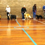 Puppy Dog Training Classes Milngavie-05
