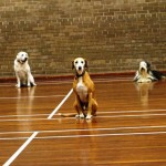 Puppy Dog Training Classes Milngavie-06