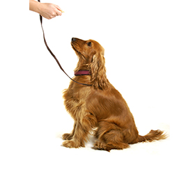 dog-training-classes-glasgow