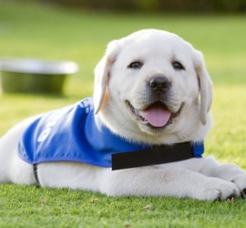 Puppy Training Classes Glasgow