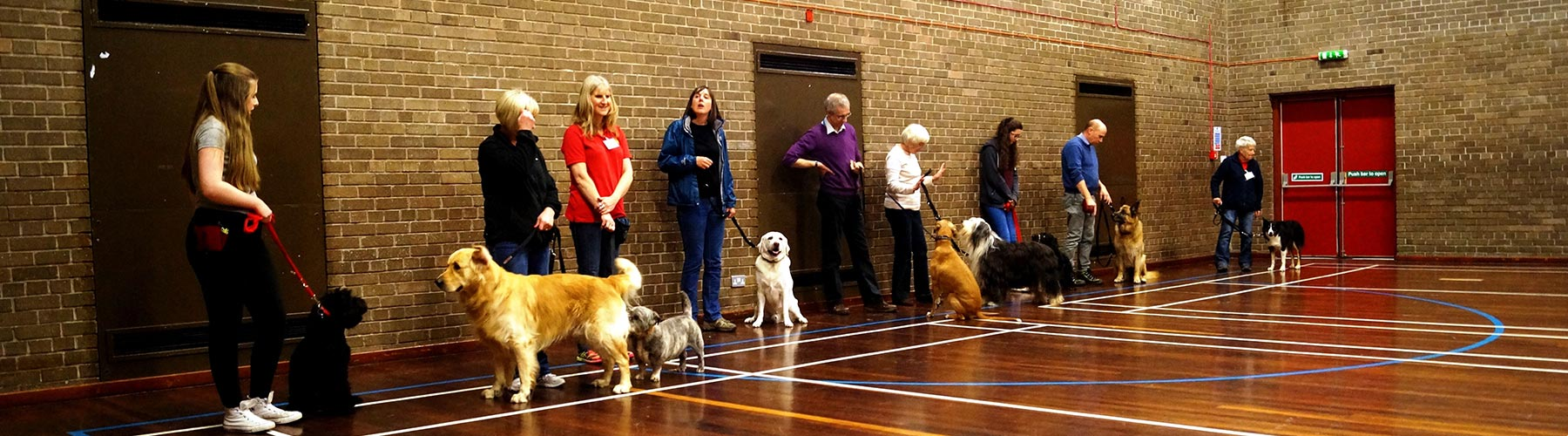 Puppy Training Bearsden Milngavie Glasgow